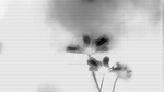 Black and White Flowers by madetobeunique