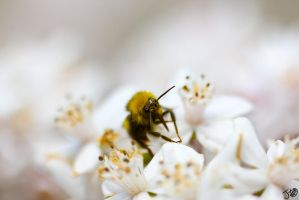 Bee by JimmyDick