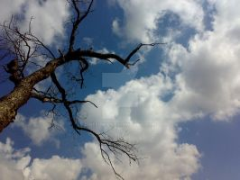 Reaching for the sky by Neelma