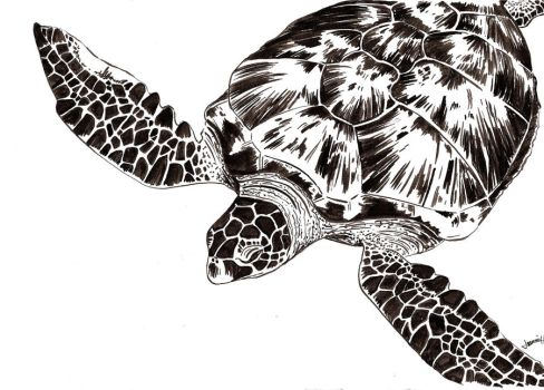 Cruising Turtle by D-Mon21