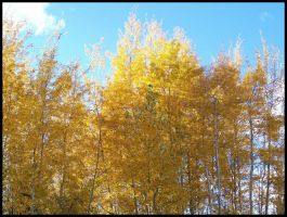 Gold Trees 2 by Tizera