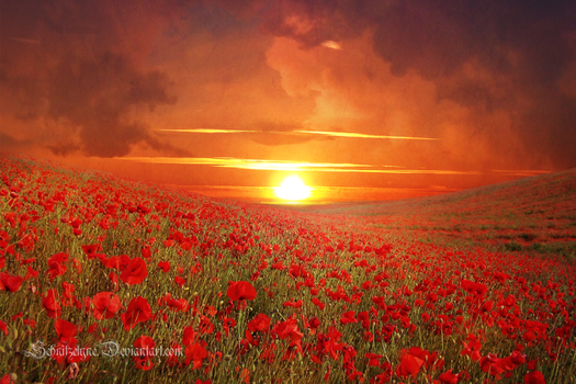 Poppy Field by ElyneNoir