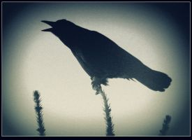 Silhouette of a Raven  2 by surrealistic-gloom