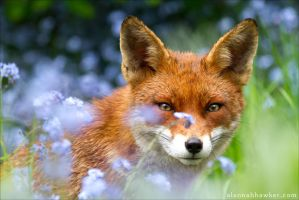 In the flowers by Alannah-Hawker