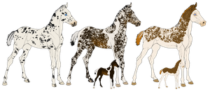 Appy Cross Lineage Foals by angry-horse-for-life