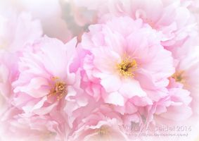 Apple Blossom by Lilyas