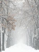 Snowstorm by helice93