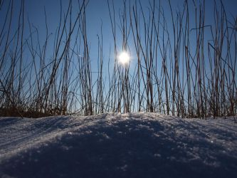 Snow Light III by Steppenblume