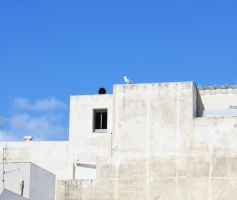 Lonely Gull by fabio88ct