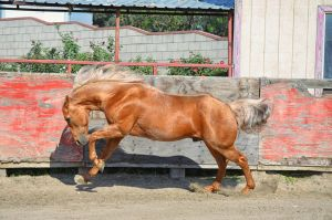 DWP FREE HORSE STOCK 55 by DancesWithPonies