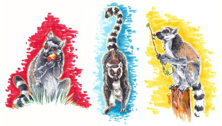 Ring Tailed Lemurs by BooYeh