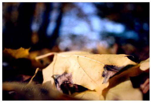 Leafy Abstract by Aerelis