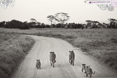 Africa : Family by achfoo