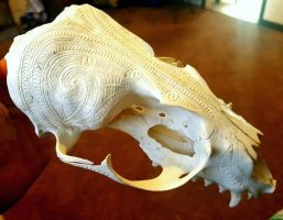 Fur seal skull by savagewerx