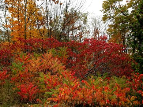 Fall colors galore by Ripplin