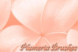Plumeria Brushes by kilanda