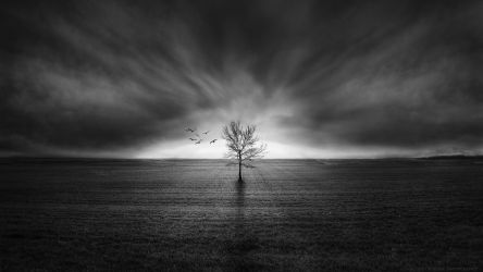 Rooted by k-simir