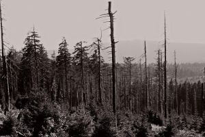 Forest after a storm ( new edit ) by UdoChristmann