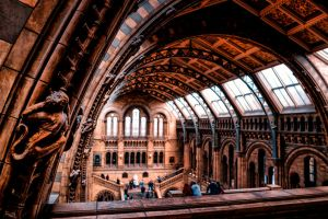 Natural History Museum London 3 by calimer00
