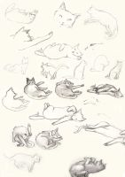 Cats study. by aofie-fionn