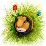 Guinea pig by DemonFromSnuffbox