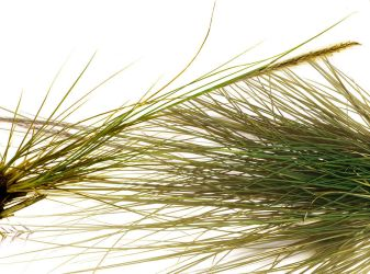 Grass Entwined by kparks