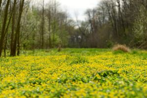 Forest Meadow Stock by little-spacey