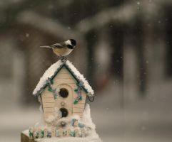 Black Capped Chickadee: Winter's home by toshema