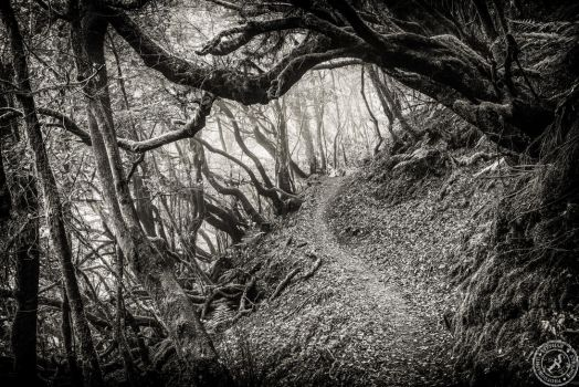 Into the fairytale forrest by BlackSunRising