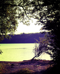 Tree by the Upper Lake by possiblyneil
