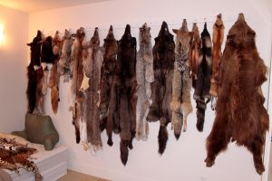 Current Pelt Inventory by NaturePunk