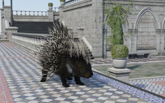 Courtyard Porcupine 8 by efredrules