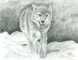 Wolf by the-perspective
