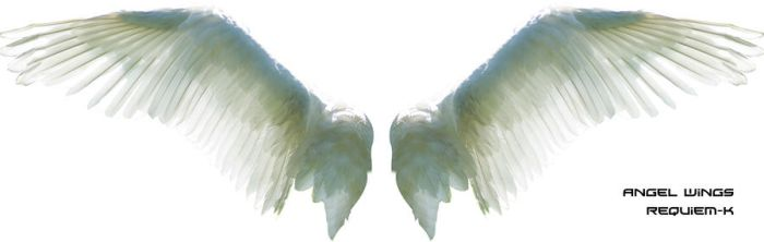 HQ Angel Wings Render by Requiem-K