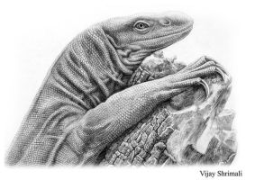 monitor lizard by vijayshrimali-art