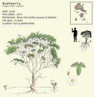Bushberry by Hyrotrioskjan