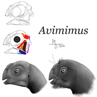 Reconstructing Avimimus by Midiaou