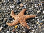 Starfish by takemypicplease