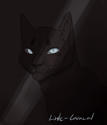 In the dark by Little-Caracal
