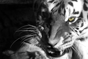 Fearsome Rage by HeWhoWalksWithTigers