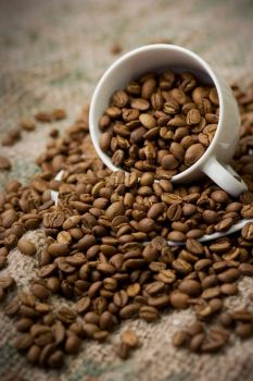 Coffee Beans 1 by sugendran