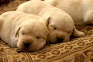 Sierra puppies 9 by ManicMechE