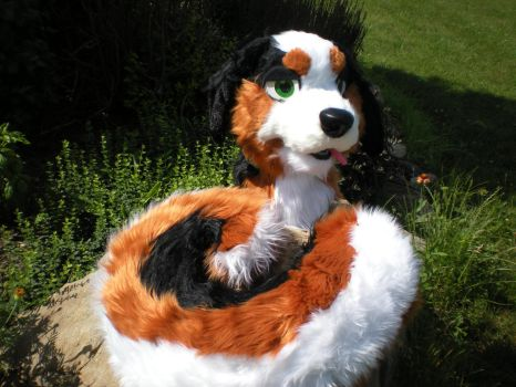 Bernese Mountain Dog partial by Thessur