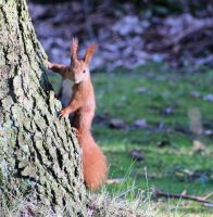 squirrel3 by viperv6