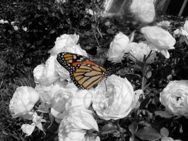Butterfly | Colour
