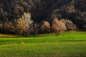 A bit trees - HDR by yoctox