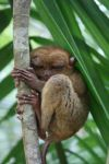 Sleepy Tarsier by Michawolf13