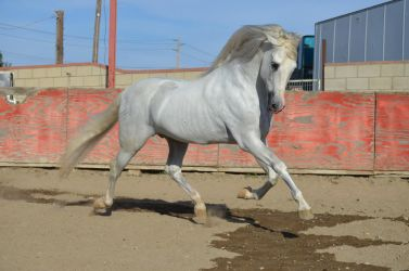 DWP FREE HORSE STOCK 239 by DancesWithPonies