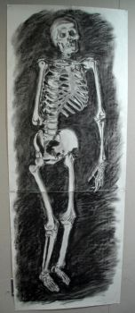 Life-Size Skeleton Drawing by MaskedWallaby