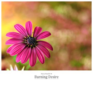 Burning Desire by signmeupscotty
